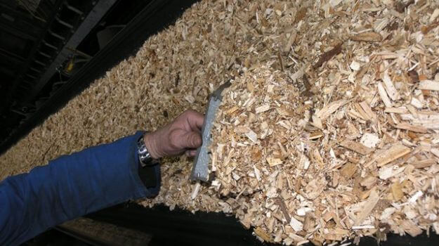 Zajem lesnih sekancev na transportnem traku za potrebe vzorčenja.